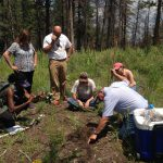 Teachers learning about forest soils near Fort Collins, CO