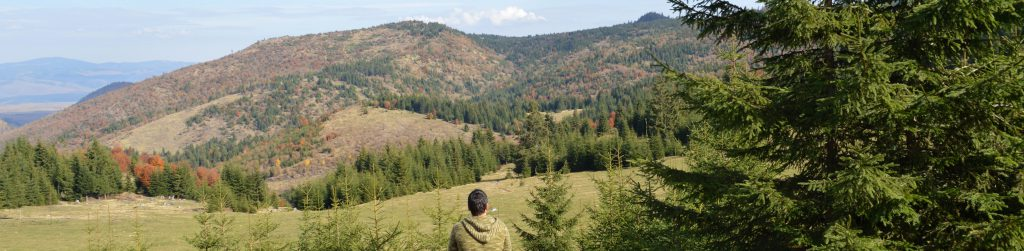 Managing Beetle-Kill & Fire Fuels in Western Forests