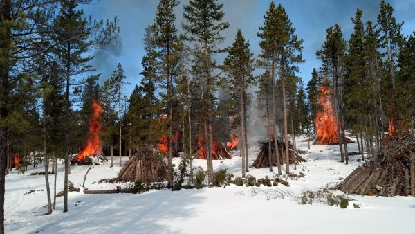 Burning slash piles resulting from the felling of beetle-killed pine in Rocky Mountain National Park