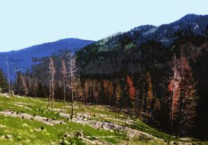 The Mountain Pine Beetle Epidemic